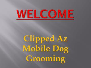 Professional Dog Grooming in Moorabbin