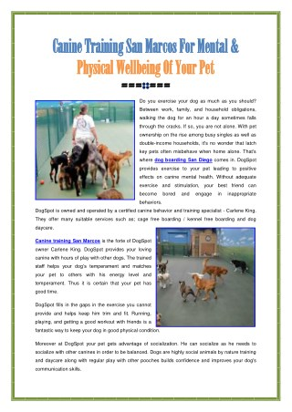 Canine Training San Marcos For Your Pet