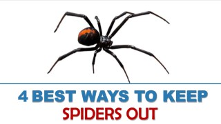 4 Best Ways to Keep Spiders Out