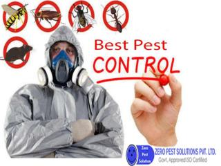 Affordable Termite Treatment in Gurgaon