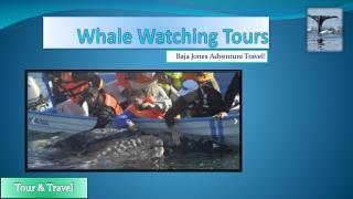 The Best Whale Watching Camp Safari in Baja