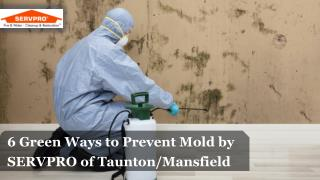 6 Green Ways to Prevent Mold
