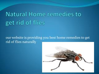 NATURAL HOME REMEDIES TO GET RID OF FLIES