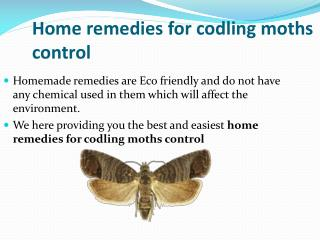 HOME REMEDIES FOR CODLING MOTHS CONTROL