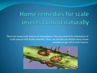 HOME REMEDIES FOR SCALE INSECTS CONTROL NATURALLY