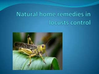 NATURAL HOME REMEDIES IN LOCUSTS CONTROL