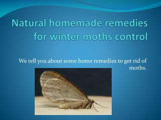 NATURAL HOMEMADE REMEDIES FOR WINTER MOTHS CONTROL