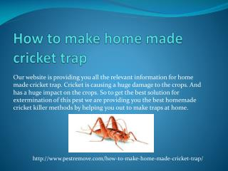 HOW TO MAKE HOME MADE CRICKET TRAP