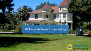 Arrow Exterminating