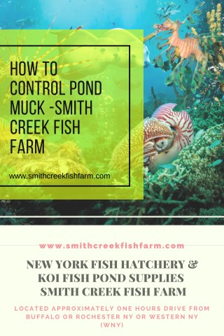 How To Control Pond Muck -Smith Creek Fish Farm