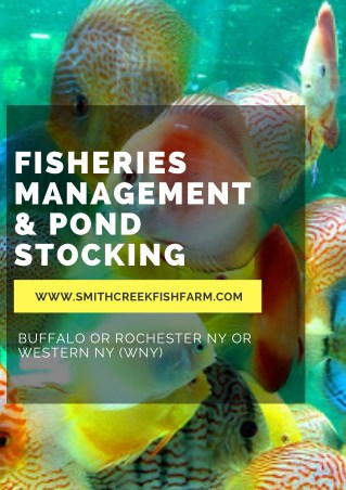 Fisheries Management & Pond Stocking | Smith Creek Fish Farm