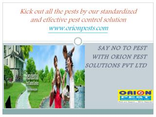 Kick out all the pests by our standardized and effective pest control solutions