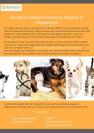 Get Small Animal Veterinary Surgery in Albuquerque