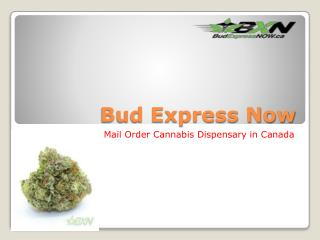 Bud Express Now-Indica products