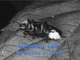 Glowing Talk By Susan J. Tweit