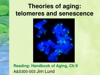 Theories of aging: telomeres and senescence