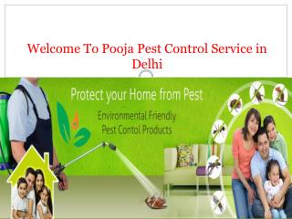 Best Pest Control Service in Delhi