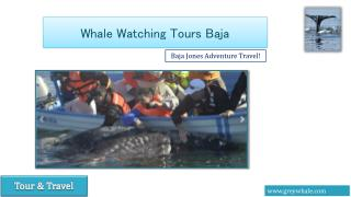 Gray Whale Watching Camp and Tours Baja