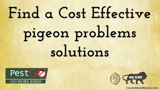 Find a Cost Effective pigeon problems solutions