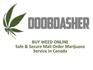 Buy medical marijuana online from doobdasher in Canada