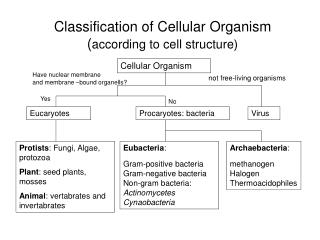 Classification of Cellular Organism according to cell structure