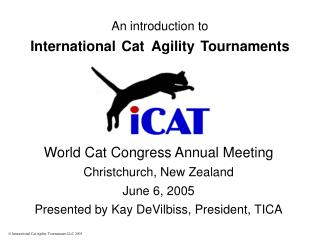 An introduction to International Cat Agility Tournaments