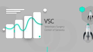 VSC | Veterinary Surgery Center of Sarasota