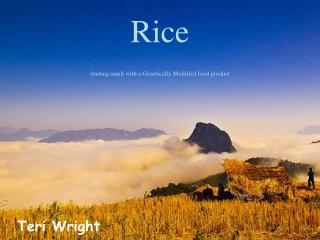Rice starting small with a Genetically Modified food product