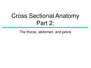 Cross Sectional Anatomy Part 2: