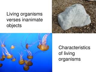 Living organisms verses inanimate objects