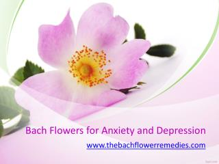 Bach Flowers for Anxiety and Depression - www.thebachflowerremedies.com