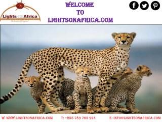 Tanzania Safari Packages