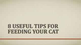 8 Useful Tips For Feeding Your Cat