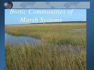 Biotic Communities of               Marsh Systems