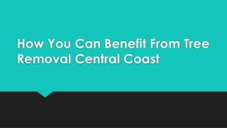 How You Can Benefit From Tree Removal Central Coast