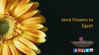 Send Flowers to Egypt | FloraDoor
