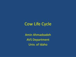 Cow Life Cycle