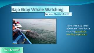 Gray Whale Watching Safari Camp