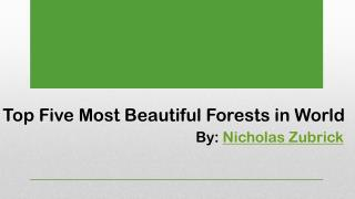 Most Beautiful Forests by Nicholas Zubrick