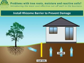 Install Rhizome Barrier to Prevent Damage