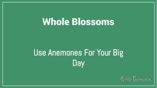 Use Anemone Color Flowers in Your Big Day Celebration
