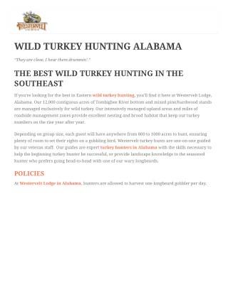 Wild Turkey Hunting In Alabama
