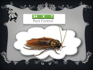 Effective Pest Control Services In Noida