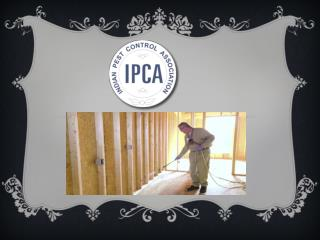 Choose The Best Pest Control Services In Noida