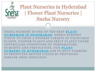 Plant Nurseries in Hyderabad | Flower Plant Nurseries | Sneha Nursery