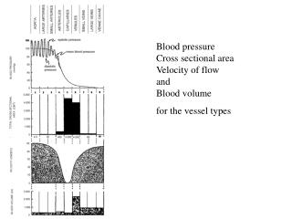 Blood pressure Cross sectional area Velocity of flow and Blood volume  for the vessel types