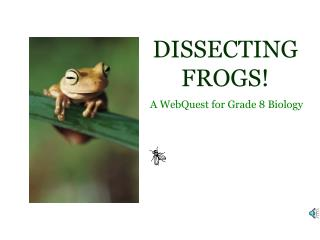 DISSECTING FROGS!