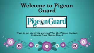 Bird Cleaning and Disinfecting- Pigeonguard.com
