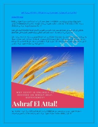 لماذا من غير المرجح أن تنجح مصر في تحقيق الاكتفاء الذاتي من القمح