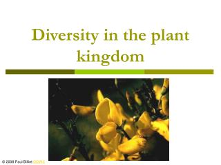 Diversity in the plant kingdom